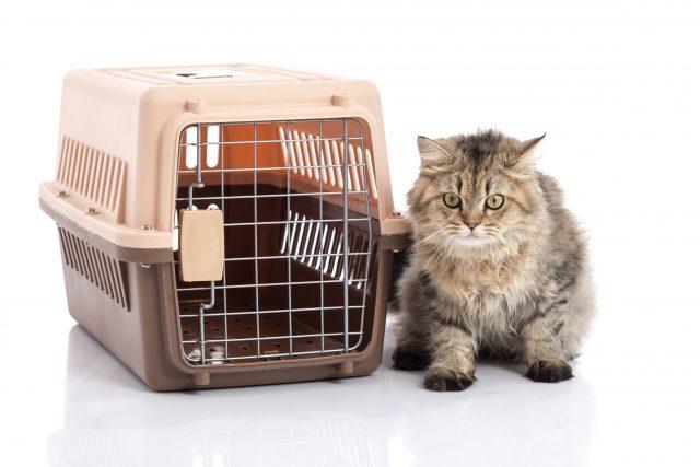 猫とキャリーケース
