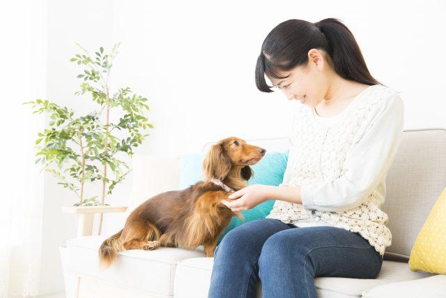 犬と新生活