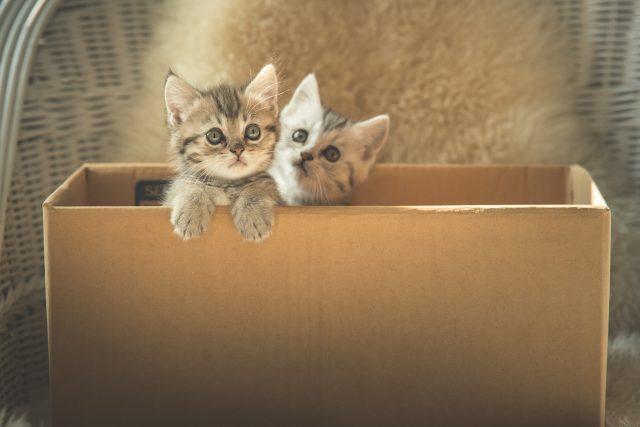 猫とダンボール