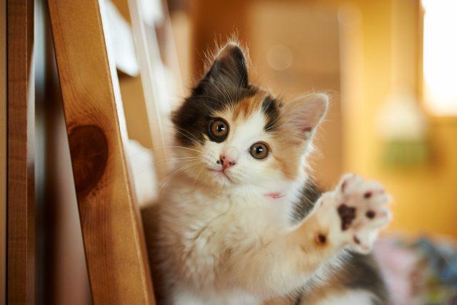 ペット(猫)