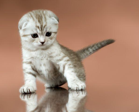なかなか慣れない猫を愛しむこと。。 - HOMEなな …